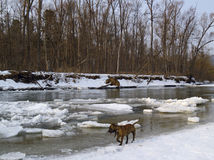 The freezing river Stock Image