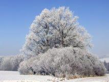 Freezing winter Royalty Free Stock Images