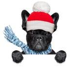 Freezing  winter dog Royalty Free Stock Photo