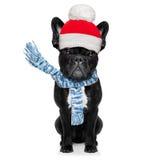 Freezing  winter dog Royalty Free Stock Photos