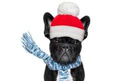 Freezing  winter dog Royalty Free Stock Photography