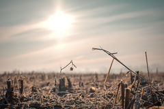 Freezing winter morning on a crop field Stock Image