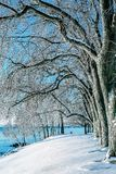 Freezing winter morning by the Lake. royalty free stock photos