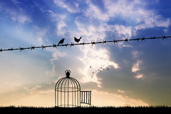 Freie Vögel auf Draht Stockfoto