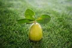 Freie Zitrone der Chemikalie auf Rasen lizenzfreie stockfotos