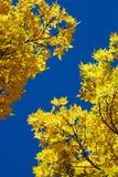 Freier blauer Himmel im Fall Lizenzfreie Stockfotos