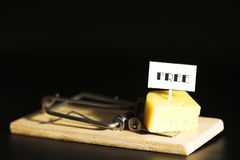 Freier Käse in? (4) Lizenzfreie Stockbilder