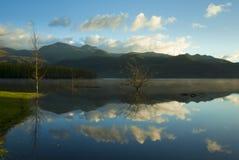Freier reflektierender See mit Baum und Wolken Stockbild