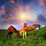 Freies Pferd Stockfoto