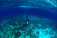 Freies Tauchen des Mannes und Stangenfischen Stockfotografie