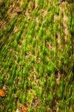 Freies Wasser und Algen Stockfotos