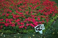 Freies Wi-Fi auf dem Hintergrund von roten Blumen Stockfotos