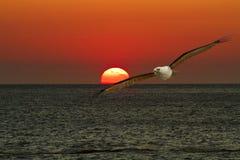 Freiflug durch unsere Flügel Lizenzfreies Stockbild