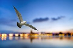 Freiflug durch unsere Flügel Stockbild