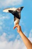Freigeben einer Taube Stockfoto