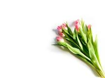 Freigestellte Tulpen Photos libres de droits