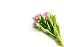 Freigestellte Tulpen Royalty-vrije Stock Foto's