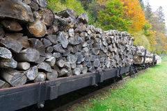 Freight train loaded with beech trunks. Royalty Free Stock Photos