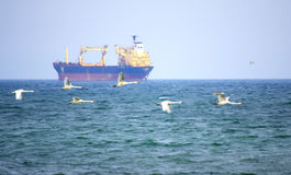 Freighter and flying swans Royalty Free Stock Photo