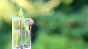 Freiheit, Schnecke, die vom Glasbehälter kriecht stock footage