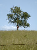Freiheit u. Einsamkeit 2 - Farbe Lizenzfreies Stockfoto