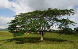 Freistehender Baum Lizenzfreie Stockfotos