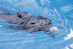Freitauchentraining auf Swimmingpool Stockfoto
