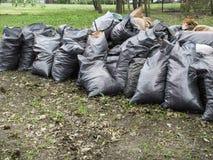 Freiwillig erbieten, N?chstenliebe, Reinigung, Leute und ?kologiekonzept - Abfalltaschen, die Bereich im Park s?ubern lizenzfreies stockbild
