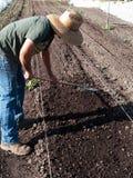 Freiwilliger vorbereitender Boden am Gemeinschaftsbauernhof Stockfotografie