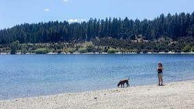 Freizeitbild einer Frau und ihres Schoßhunds, die schönen freien Tag entlang See genießen lizenzfreie stockfotografie