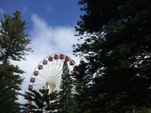 Fremantle Ferris Wheel royaltyfri bild