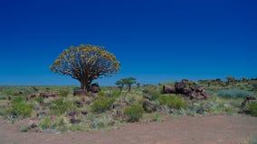 Fremi il campo sportivo dell'albero o della foresta e dei giganti del kokerboom vicino a Keetmanshoop, Namibia Fotografia Stock Libera da Diritti