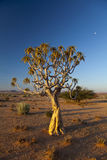 Fremi l'albero Fotografie Stock