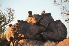 Fremi l'albero (dichotoma) dell'aloe, Namibia Fotografia Stock