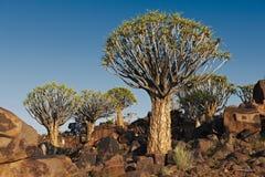 Fremi la foresta dell'albero Immagini Stock