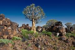 Fremi la foresta dell'albero Fotografia Stock