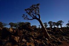 Fremi la foresta dell'albero Fotografie Stock