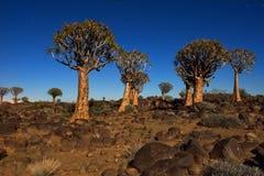Fremi la foresta dell'albero Fotografie Stock Libere da Diritti