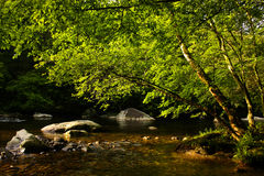 Fremont River, Great Smoky National Park Stock Photos