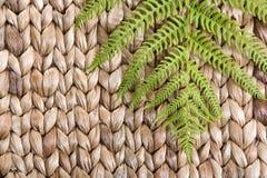 Fren leaf on a grass Stock Photos