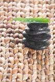Fren leaf on a grass Royalty Free Stock Photos