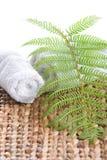 Fren leaf on a grass mat Stock Photography