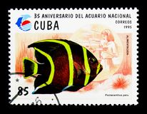 French Angelfish (Pomacanthus paru), National Aquarium serie, ci. MOSCOW, RUSSIA - NOVEMBER 25, 2017: A stamp printed in Cuba shows French Angelfish (Pomacanthus royalty free stock image