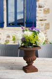 French antique vase with flowers Stock Images