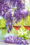French art of living: two glasses of pink wine and blooming viol. Two glasses of pink wine and blooming violet wisteria near the river Stock Images