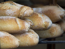 French baguettes Stock Images