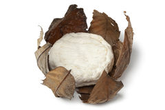French Banon cheese in chestnut leaves. On white background stock images