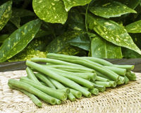 French beans. A close up of french beans on a garden table Royalty Free Stock Image