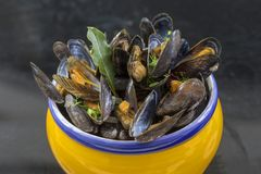 French blue mussel with herbs in a yellow. Seafood in dark background Royalty Free Stock Photography