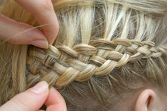 French braid. Braid one's hair of blond young girl Stock Image